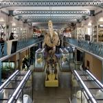 Museum Of Natural History Or Musee Dhistoire Naturelle De Lille