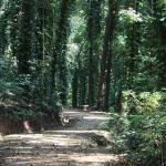 Udawattakelle Sanctury