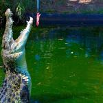 Crocodylus Park And Zoo