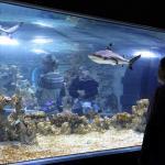 Akvariet Or Bergen Aquarium