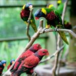 The Bird Park