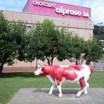 Museo Del Cioccolato Alprose