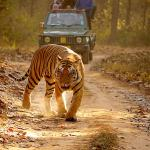 Kanha Kisli National Park
