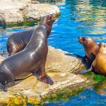 Sea Lion Interaction