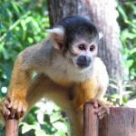 Bush Babies Monkey Sanctuary