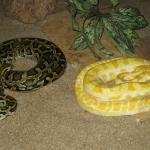Hartbeespoort Snake And Animal Park