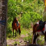Discovery Horse Tours