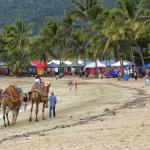 Airlie Beach Community Market