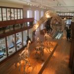 Musee Dhistoire Naturelle De Nantes