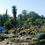 Chandigarh Botanical Garden And Nature Park