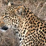 African Flame Safaris
