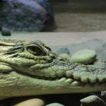 Naturaliste Reptile Park