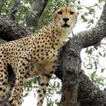 Nhongo Safaris Day Tours