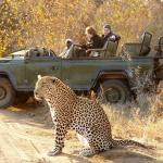 Game Drives At Phalaborwa Gate