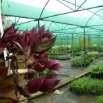 Sippighat Farm