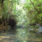 Colo-i-suva Forest Reserve