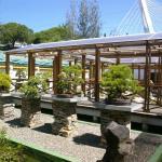 Bonsai Museum