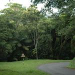Tobago Forest Reserve
