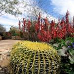 Desert Bontanical Garden