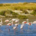 Camargue Nature Park