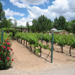 Casa Rondena Winery