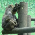 Zoologico Y Parque Cuaternario De Santillana Del Mar