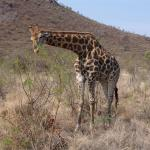 Pilanesberg National Park And Game Reserve