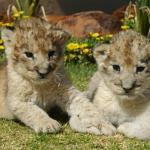 Ukutula Lion Park And Lodge