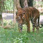 Dampa Wildlife Sanctuary