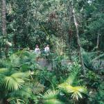 Kuranda Rainforest Nature Park