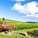 Taste Burgundy Wine School