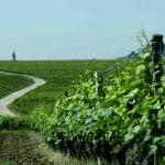 Burgundy Wine Route Between Beaune And Dijon