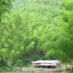 Celestial River Ecology Scenic Area
