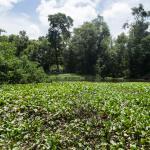 Parque Ecologico Do Coco