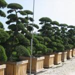 Bonsai Zentrum