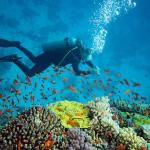 Dive India