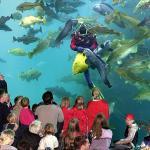 Alesund Aquarium