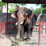Hutsadin Elephant Foundation