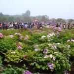 Luoyang International Peony Garden