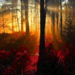 Tyrebagger Forest