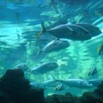 Oceanarium- The Bournemouth Aquarium