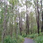 Coombabah Lakelands Conservation Area- Western Section