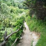 Footpath Monterosso- Vernazza