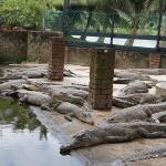 Miri Crocodile Farm Cum Mini Zoo