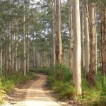 Boranup Forest Maze