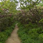 Craggy Gardens