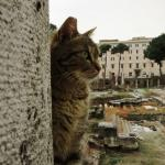 Roman Cat Sanctuary