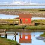 Don Edwards San Francisco Bay Wildlife Refuge