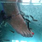 Alleviate Fish Spa