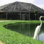 Parque Mangal Das Garcas